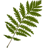 Grass Trava - Plants -