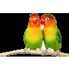 papagaji - Animals -