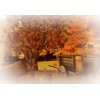park in fall - 插图 -