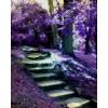 path - Illustrations -