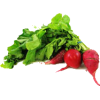 Rotkvica - Vegetables -