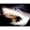 shark - Animali -