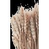 wheat - 植物 -