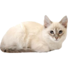 white cat - Animals -