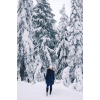 winter - Pozadine -