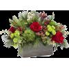 winter arrangements - Plants -