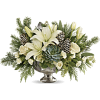 winter arrangements - Piante -