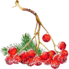 winter berries - Przedmioty -
