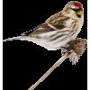 winter bird - 饰品 -
