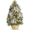 winter/christmas arrangements - Plants -