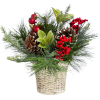 winter/christmas arrangements - Растения -