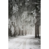 winter scenery - Fundos -