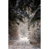 winter scenery - Background -