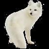 wolf - 动物 -