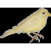 Yellow Bird - Rascunhos -