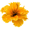 Yellow Orange Flower - Plants -