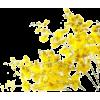 yellow flowers - Uncategorized -