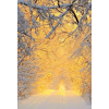 yellow light of winter - Nature -
