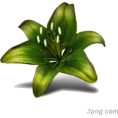 Scapin - Flower - Uncategorized -
