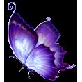 FrazzledKat1 - PurpleButterfly2 - Uncategorized -