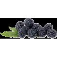 Doozer  - berries - Uncategorized -