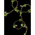 svijetlana Plants -  Biljke