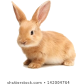 HalfMoonRun - bunny / rabbit - Uncategorized -