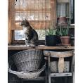 HalfMoonRun - cat photo - Uncategorized -