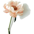 beleev  - flower - Uncategorized -