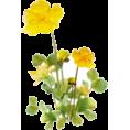 beleev  - flowers - Uncategorized -