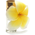 lence59 - parfum - Fragrances -