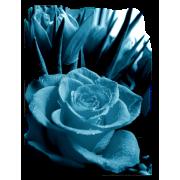 Rose Ruža - Plants -