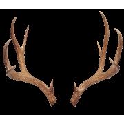Antlers - Animals -