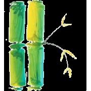 Bambus - Biljke -