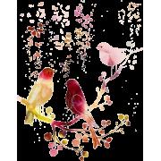 Birds in branches - Ilustrationen -