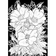Black & White Floral Background - Illustrations -