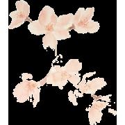 Blossom - Plantas -