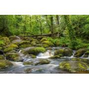 Bodmin Moor Cornwall UK - Natural -