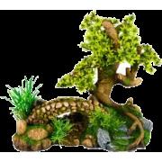 Bonsai - Biljke -