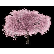 Cherry Blossom Tree - Plants -