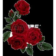 Dark Red Rose Corner - Plants -