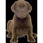 Dog - Animals -