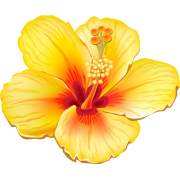 Hibiscus flower illustration - Illustrazioni -