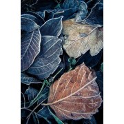Iced leaves - Natura -