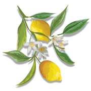 Lemon Branch - Piante -