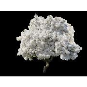 Magnolia Tree - Plants -