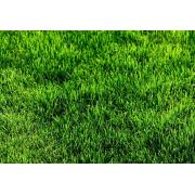 Grass - Pozadine -
