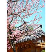Japan - Pozadine -