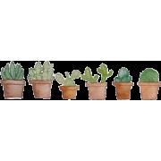 Painted Cactuses - Plantas -