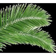 Palm Leaf - Biljke -